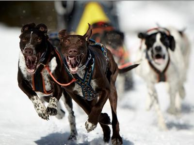 Schlittenhunderennen in Splügen