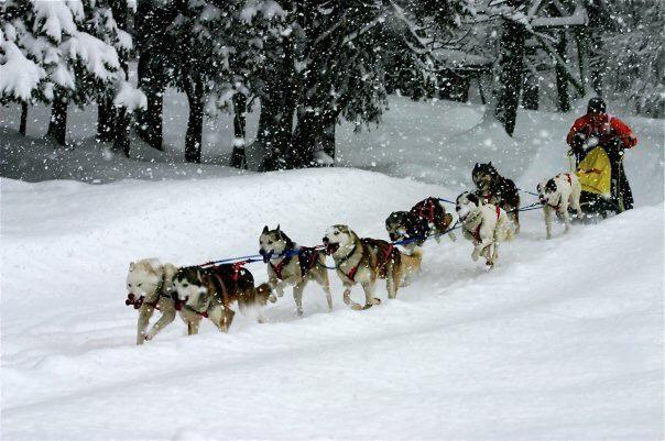 Reggea Rennmaus führte die Truppe schnell und sicher voran, egal welches Wetter, egal wie schwer der Trail war
